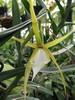 Une orchidée en danger d'extinction