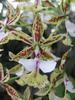 Belle orchidée blanche vert et rouge
