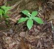 la plante dans la nature