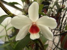 belle fleur blanche avec son coeur rouge