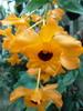 fleur d'un jaune éclatant