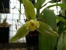 grande fleur verte avec son coeur jaune blanc