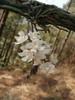 belle orchidée rose clair