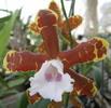 fleur éfilochée blanche et marron
