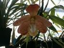 Fleur rare zebrée jaune et marron