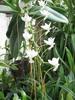 Fleur d'une élégance inénarrable