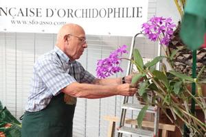 La Société Française d'Orchidophilie au travail