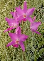 belle floraison multiple éclatante