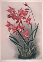 Plache botanique faite à la main