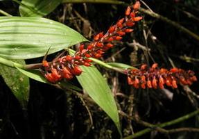 Petites fleurs en épi orange