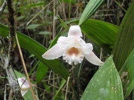 fleur fragile blanche