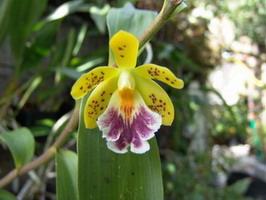 Petite fleur chatoyante