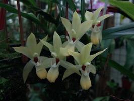 élégante petite fleur blanche et jaune