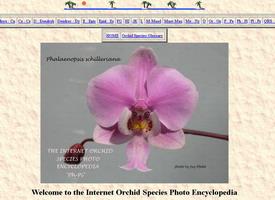 Une copie écran du site de Jay avec un Phalaenosis rose