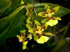 Multitude de petites fleurs jaune vif