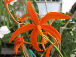 grande fleur orange très élégante