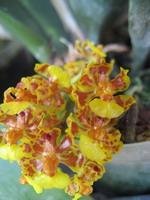 Fleur jaune époustouflante