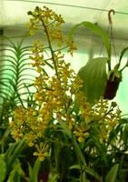 la plante en entier