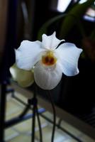 Grosse fleur blanche avec un sabot